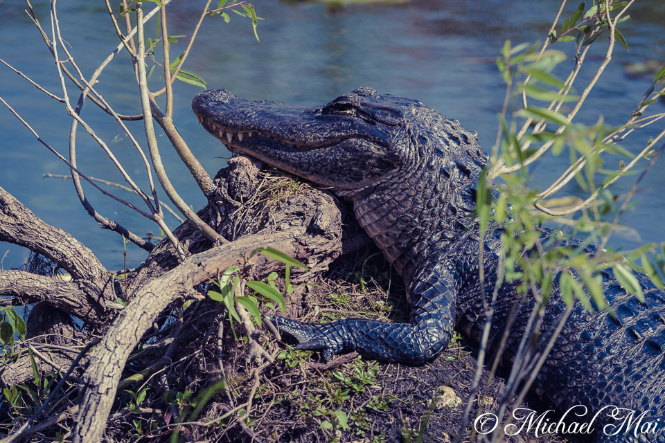 Everglades & KeyLargo, Florida (USA) 2017